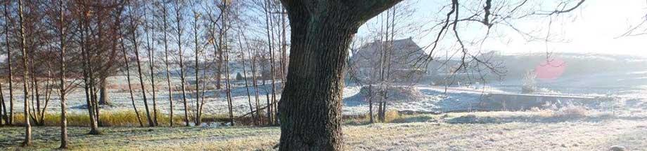 Eichenbaum in der winterlichen Landschaft in Kosel