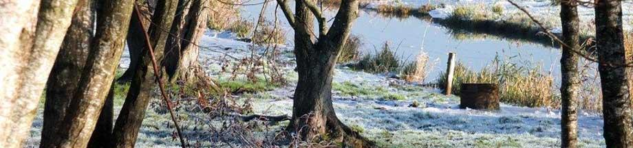 Koseler Au im Winterkleid