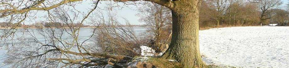 Abbruchkante an der winterlichen Schlei bei Windstille nahe Hakenhöft