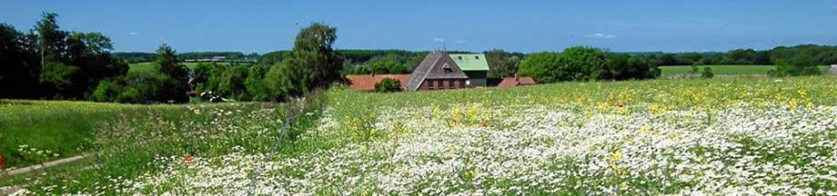 Sommerwiese in Bohnertfeld mit typischem Bauernhof im Hintergrund