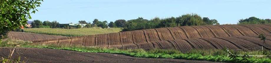 Gepflügte Feldfurchen auf einer Ackerlandschaft nahe Kosel