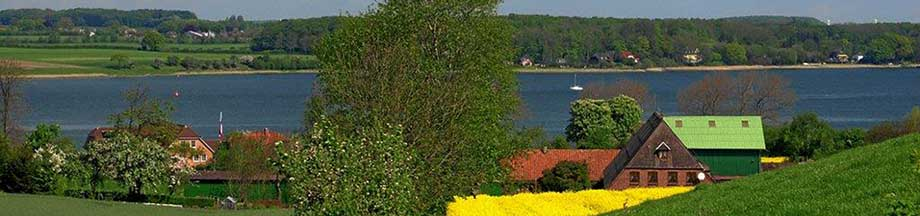 Sommerblick auf Bohnertfeld mit Rapsfeld und der Schlei im Hintergrund