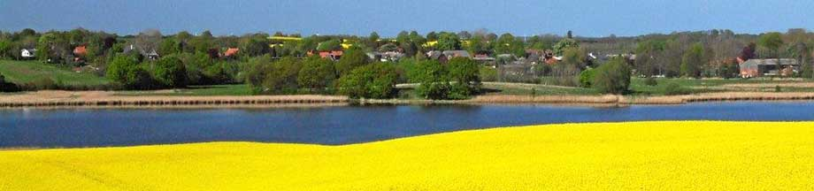Rapsfeld am Ornumer Noor mit Blick Richtung Bohnert