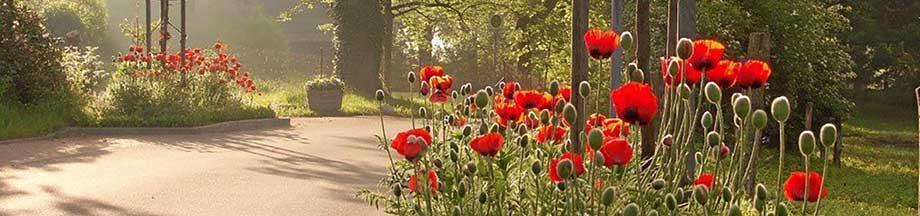 Friedhof in Bohnert in der Sommersonne mit Mohnblumen