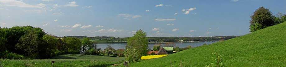 Bohnertfeld im Sommer mit Blick auf die Schlei im Hintergrund