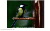 Wer singt denn da im Naturpark Schlei? Kurs für Vogelstimmen