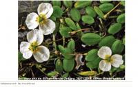 Natura 2000 - Wo seltene Arten gedeihen