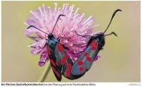 Falter fliegen auf Schoolbek-Garten