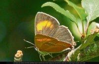 Neue Heimat für 26 Schmetterlingsarten